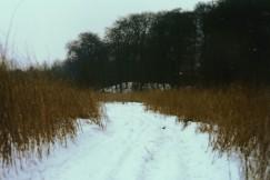 Ahrensburg- - Moorwiese im Schnee