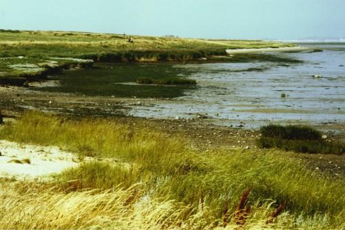 Wattlandschaft