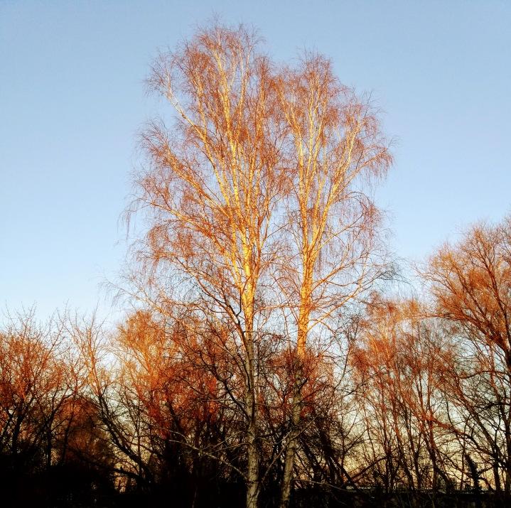 Sonniger Winternachmittag in Schwanheide